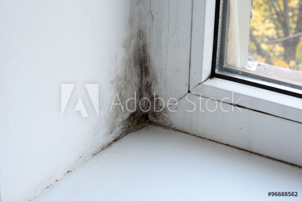 Black mold growing in the corner of a window.
